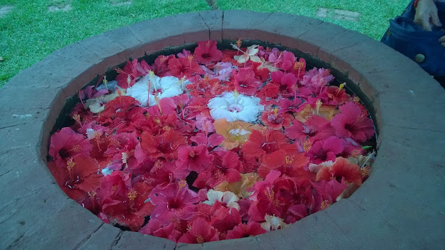 A well filled with flowers at the Eden Park.