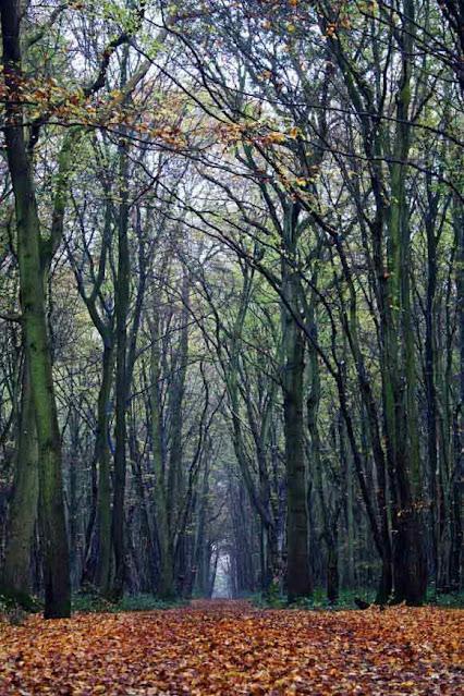 Daftar  Hutan Paling Berhantu di Inggris