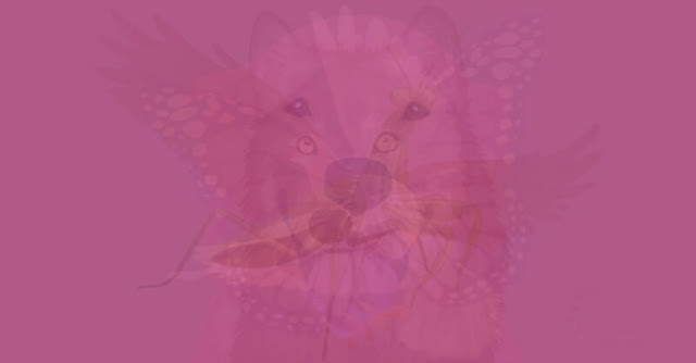 filoji-hayvan-testi1.jpg