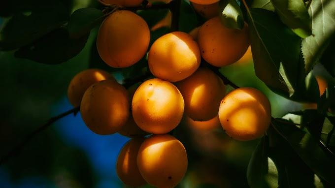 Damasco, Cacho, Fruta Vitamina C, Alimento