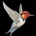 Spirit Totem Hummingbird