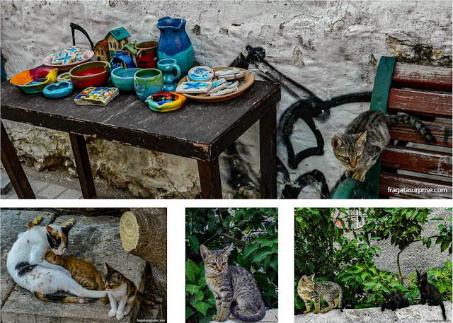 gatos em Nafplio, Grécia