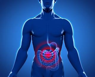 Manfaat Probiotik Untuk Kesehatan