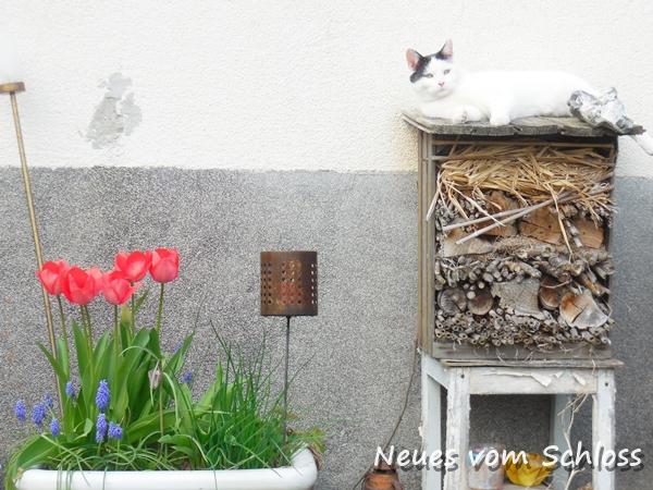 12 von 12 (April 2016)- neuesvomschloss.blogspot.de