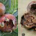 Fructele care distrug pietrele de la rinichi și reduc nivelul colesterolului în sânge