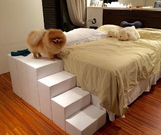 escadas para cães em cama king size