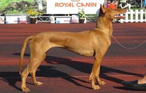 الكلب الفرعوني الذي رباه الفراعنه