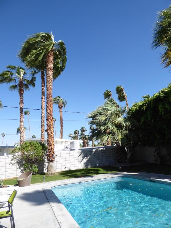 Windswept Palm Springs
