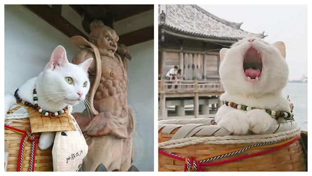 """Ngôi đền độc đáo này có tên """"Nyan Nyan Ji"""", trong tiếng Nhật có thể dịch ra là """"Meo Meo Tự"""" (Meow Meow Shrine). Chủ sở hữu hiện tại của Nyan Nyan Ji, người có tài khoản Instagram là @nekojizo cho biết ngôi đền được sáng lập bởi một họa sĩ tên là Toru Kaya – người chuyên vẽ và trang trí cho các ngôi đền, chùa ở Nhật Bản. Vì đặc biệt yêu thích mèo, ông đã dành tài sản cả đời của mình để lập nên một ngôi đền cho loài vật đáng yêu này."""
