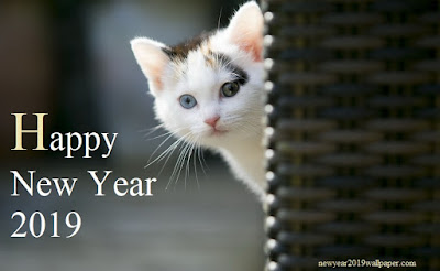 Cats New Year 2019 Wallpapers