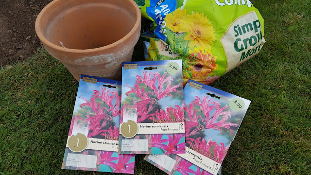 Pre-packed Nerine sarniensis bulbs, compost and a terracotta pot on the lawn.