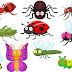 कीट पतंग के नाम Insects