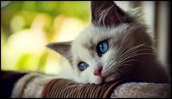 Gambar Kucing Comel Yang Lucu Ian M