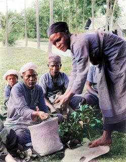 parbaringin mendistribusikan padi kepada masyarakat batak