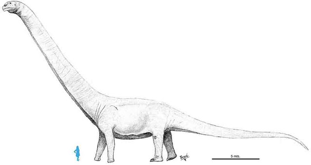 Dinosaurus terbesar patagotitan mayorum