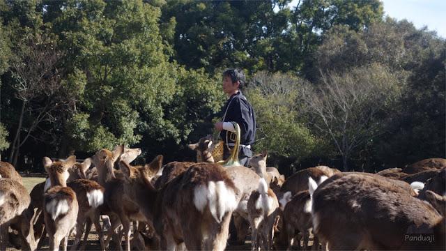 Deer Feeding di Nara Park