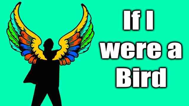 If I were a bird English essay