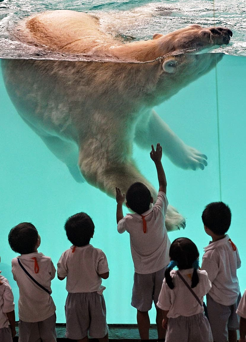 10 of the World's Most Famous Zoos -  Singapore Zoo, Singapore
