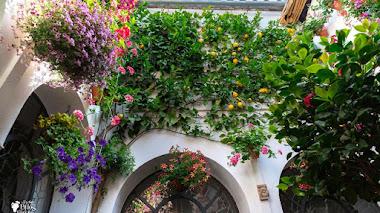 La flora de los Patios de Córdoba