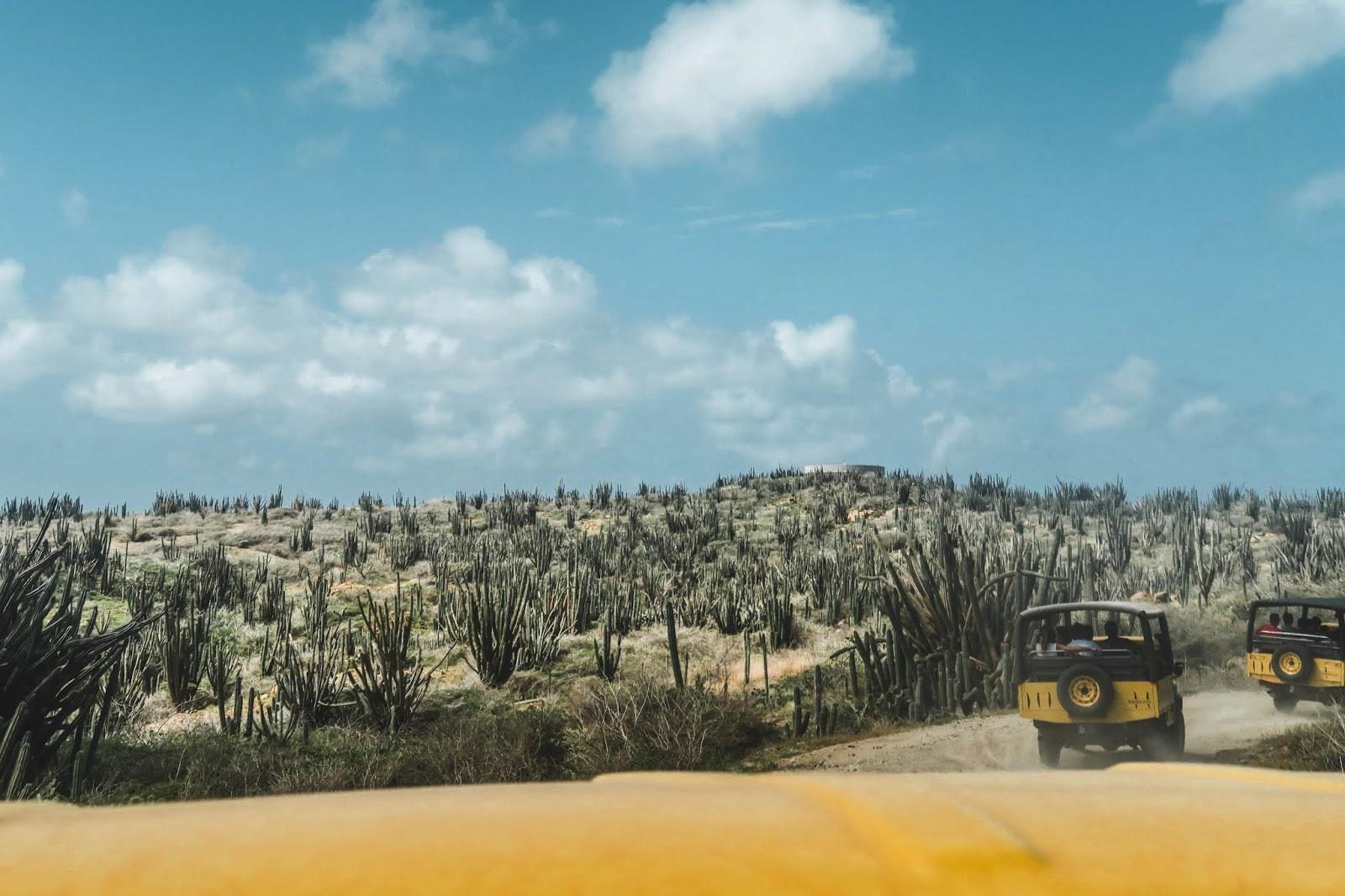De Palm Tours Aruba