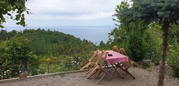 Ayancık Yeşilyurt Karadeniz Çay Bahçesi