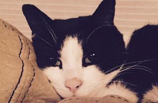 немой кот