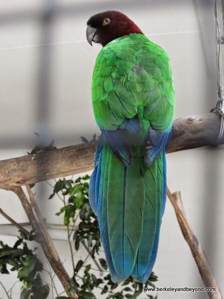 parrot at Kula Eco Park in Fiji
