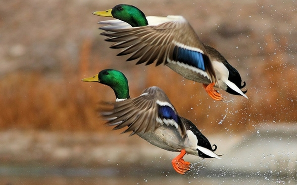 التقاط لقطات الإقلاع والهبوط عند الطيور