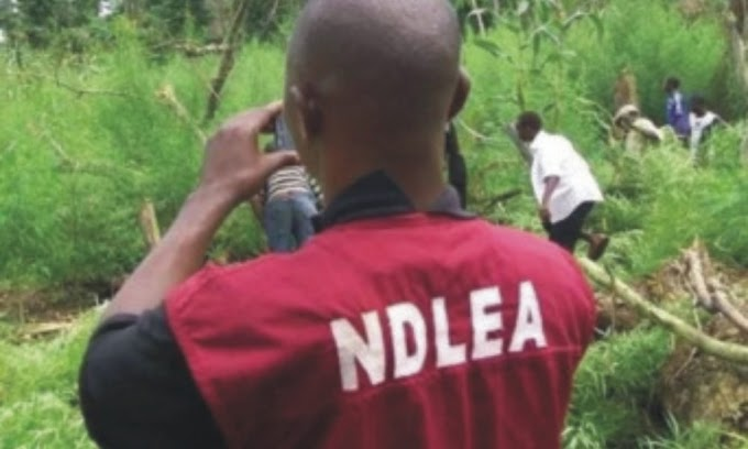 NDLEA arrests police, immigration officers and others; seizes illicit drugs