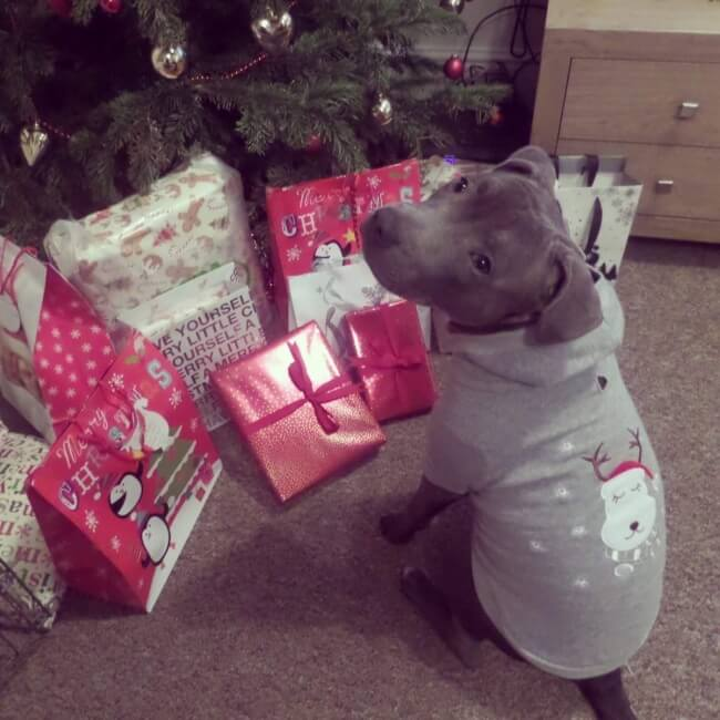 23 Heartwarming Pictures That Put Us In The Mood For Christmas