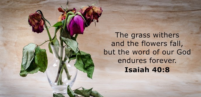 The grass withers and the flowers fall, but the word of our God endures forever.