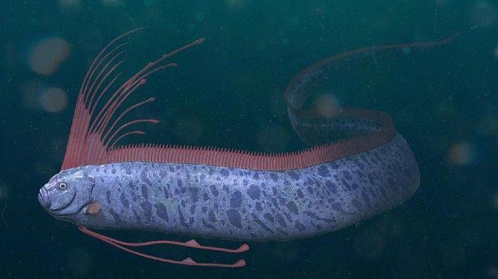 Gambar Ikan Oarfish