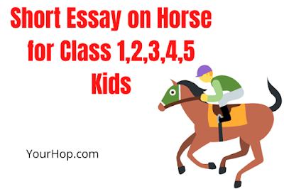 Essay on Horse