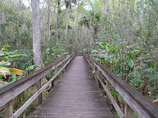 boardwalk hike at Florida State Parks