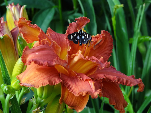 The beginning... | a girl and her garden | Daylily Blog