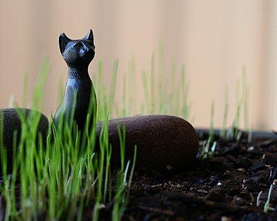 Lenten Grass, an old Finnish tradition ♥ KitchenParade.com, helping children mark the season of Lent.