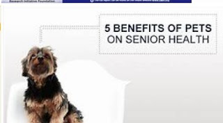 Відкриваючи переваги тваринам страхування здоров'я