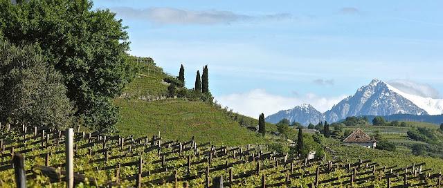 Alois Lageder Alto Adige winery