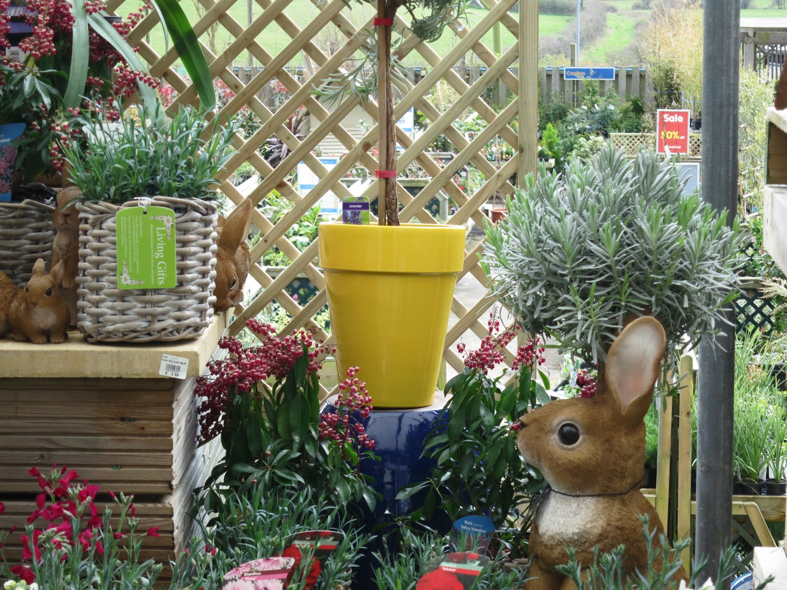 Ornamental rabbit and yellow pot in garden centre display