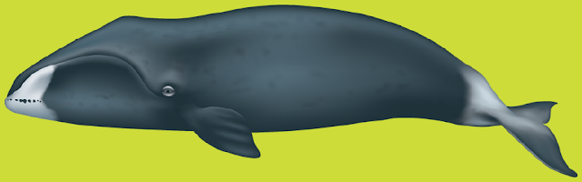 Bowhed Whales
