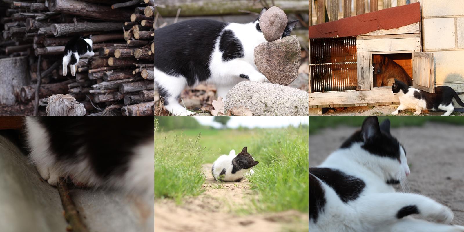 kocie faile, śmieszne koty
