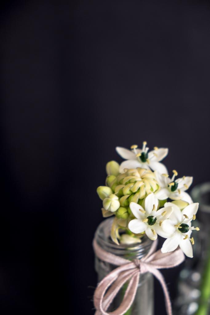 www.fim.works | Lifestyle Blog | weißer Milchstern, Gärtnerschreck in Weiß, Blütendetails vom Milchstern