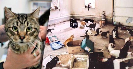 Mujer australiana abandonó 14 gatos y se comieron entre sí