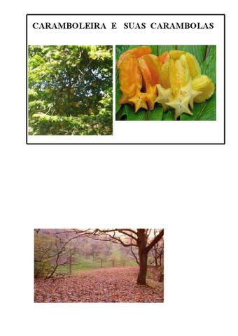 Frutas do Outono