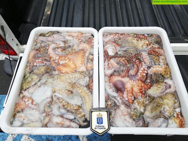 Inspección Pesquera se incauta de 74 kilos de pulpo y medregal ilegal en La Palma