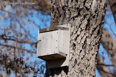 Caixa per a ratpenats a la Reserva de Sebes
