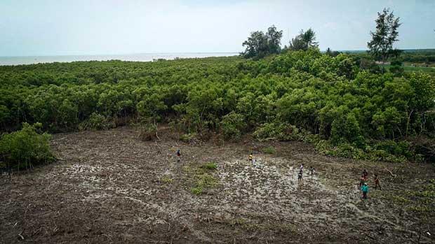 lanskap hutan mangrove di pantai sejarah