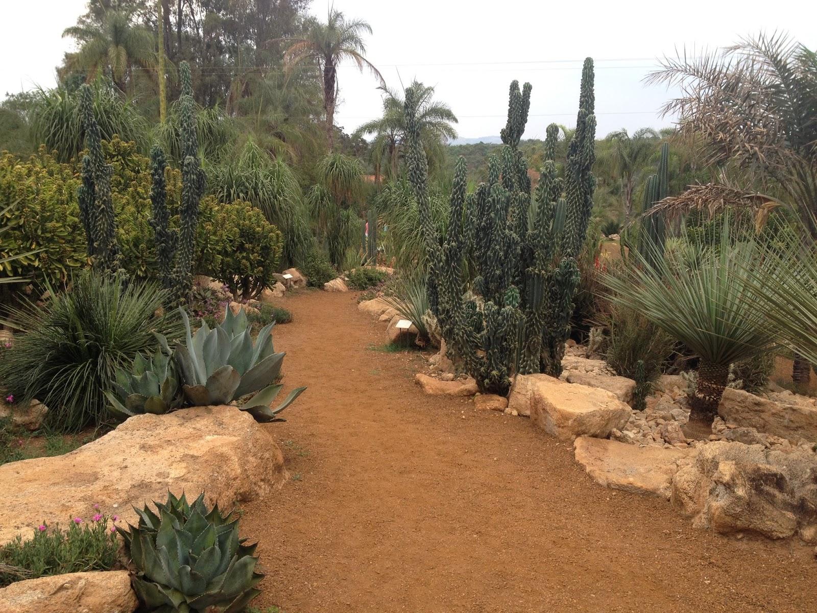 Jardim desértico inhotim