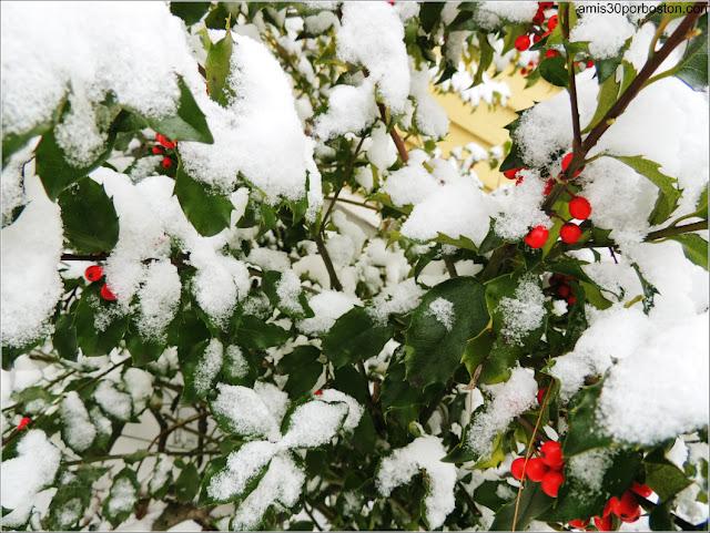 Vegetación Cubierta de Nieve