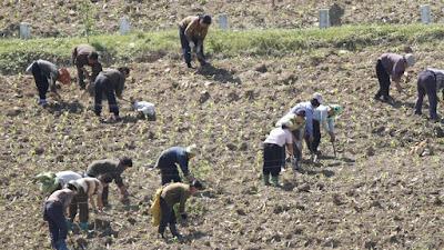 north korea food starvation